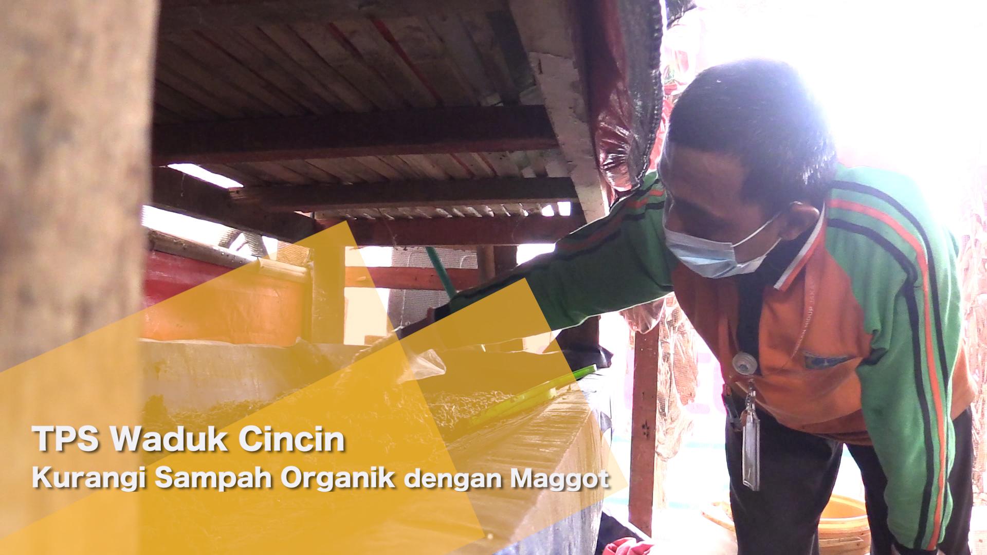 TPS Waduk Cincin Kurangi Sampah Organik dengan Maggot