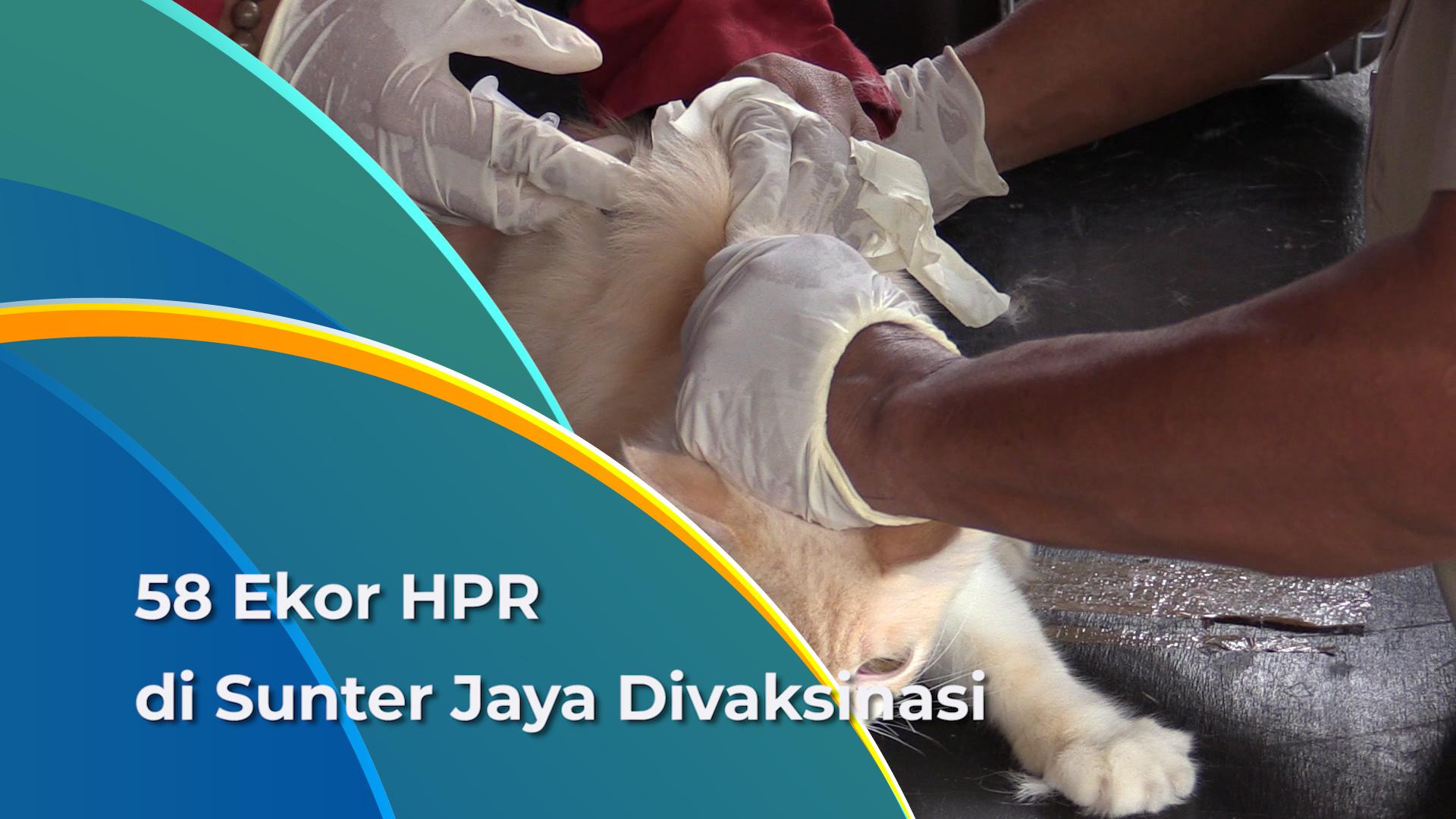 Vaksinasi Rabies Gratis Digelar di Sunter Jaya