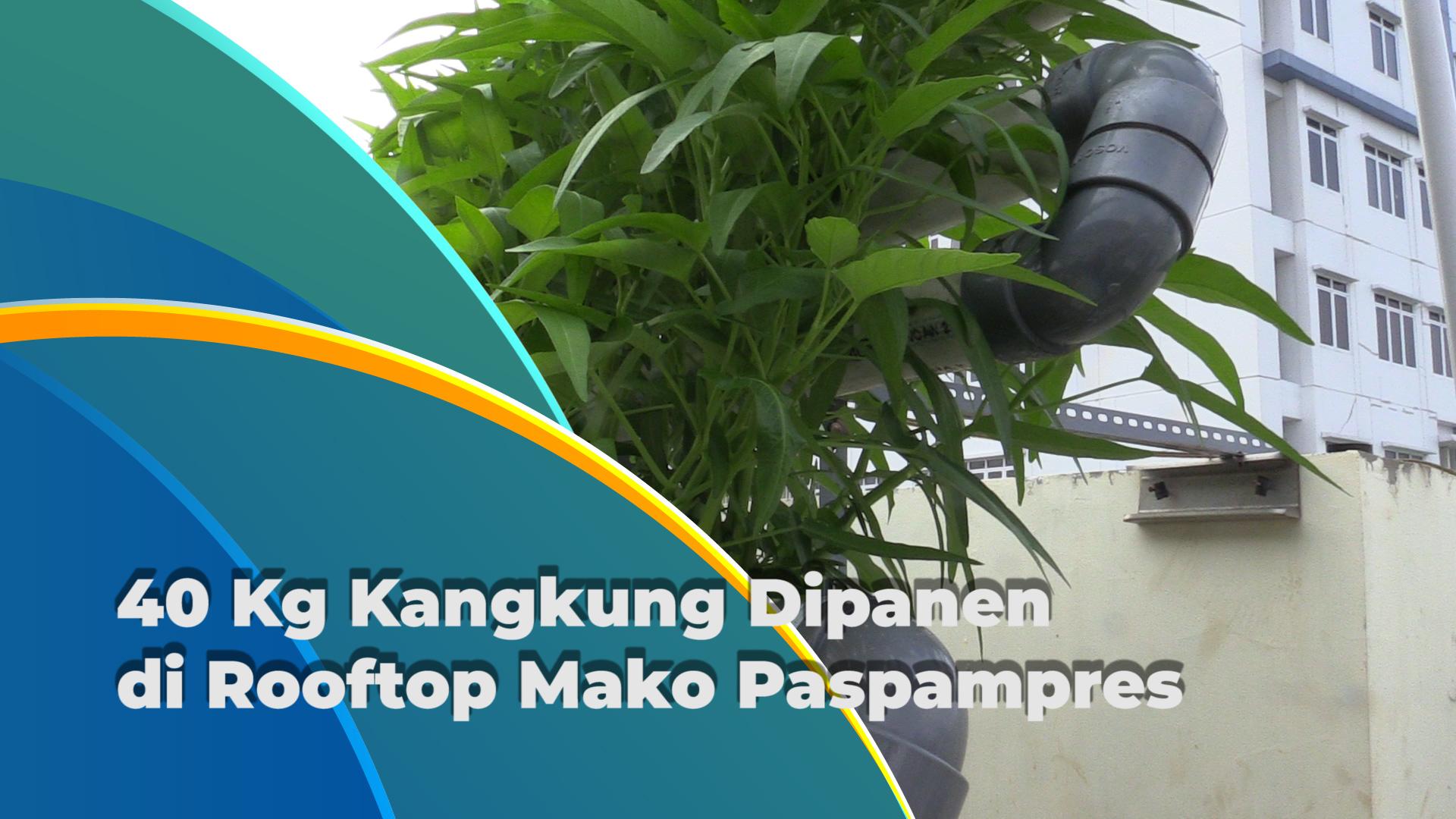 Panen Kangkung di Rooftop Mako Paspampres