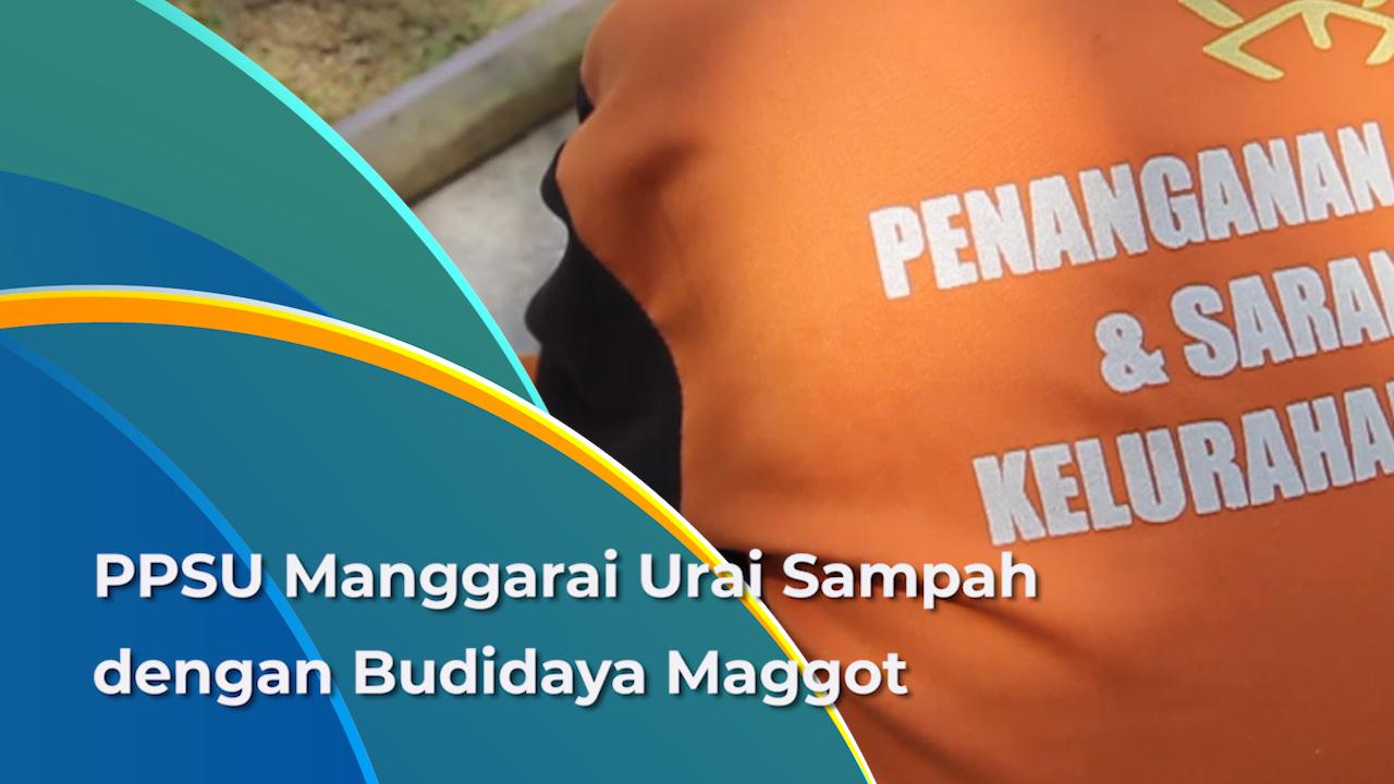 Sampah di Manggarai Berkurang Melalui Budidaya Maggot